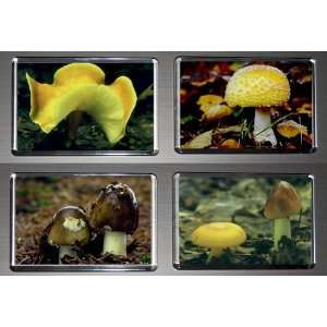 Boxed Set of 4 Fridge Magnets Fungus Mushrooms 1